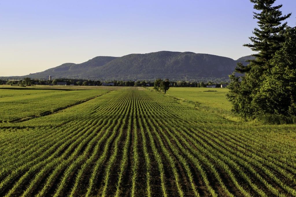 Paysage agricole de Saint-Mathieu-de-Beloeil avec vue sur le mont Saint-Hilaire