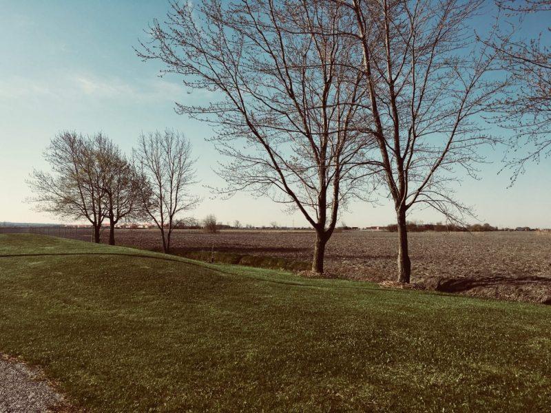Arbre et paysage