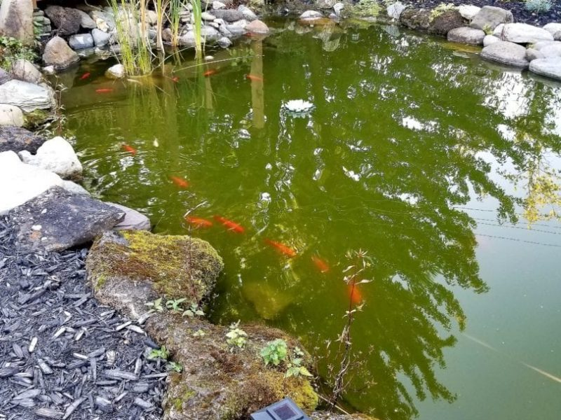 Poisson dans un étang