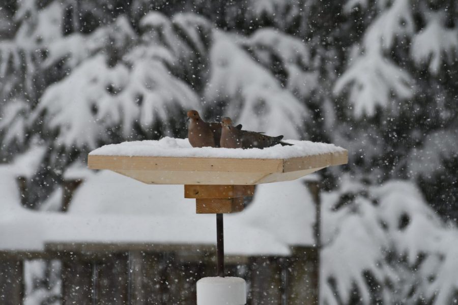 Photo : France Brabant - Vive la neige
